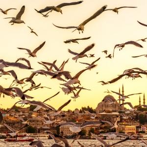 Золотой Рог, Стамбул / Тревел-фотография